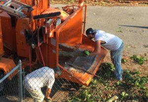 Bronx Tree Removal Service