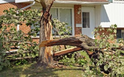 We Offer 24 Hour Emergency Storm Services in NYC