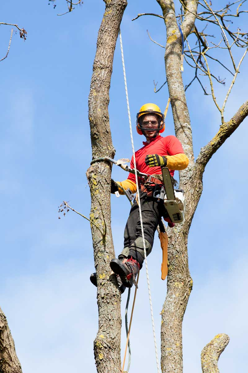best-tree-service-removal-company