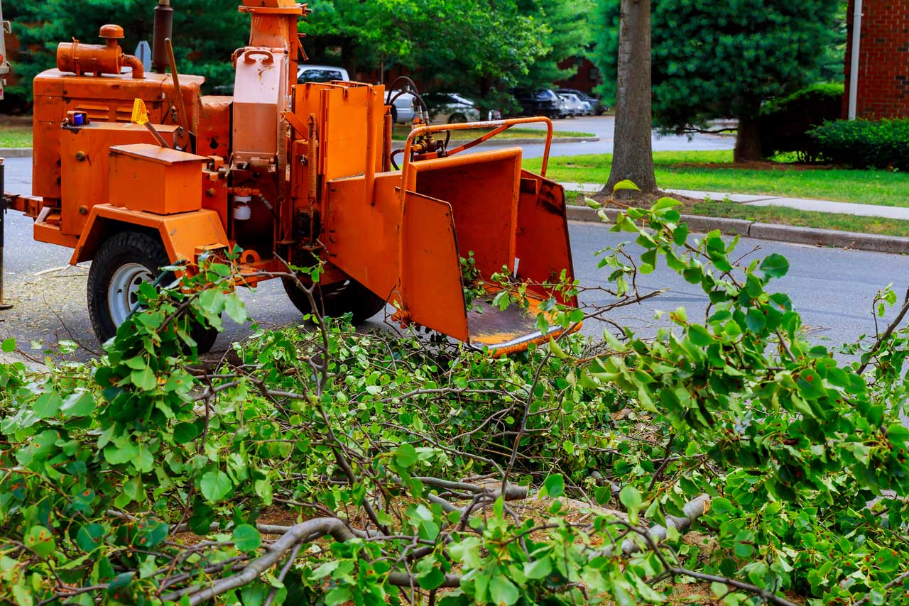 tree-removal-near-me-in-the-bronx
