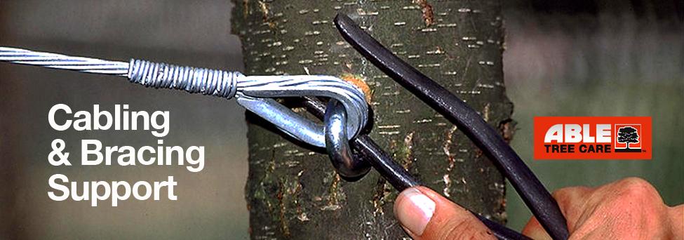 Cabling & Bracing Trees