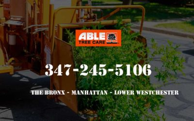 Compare & Save On Tree Services in the Bronx