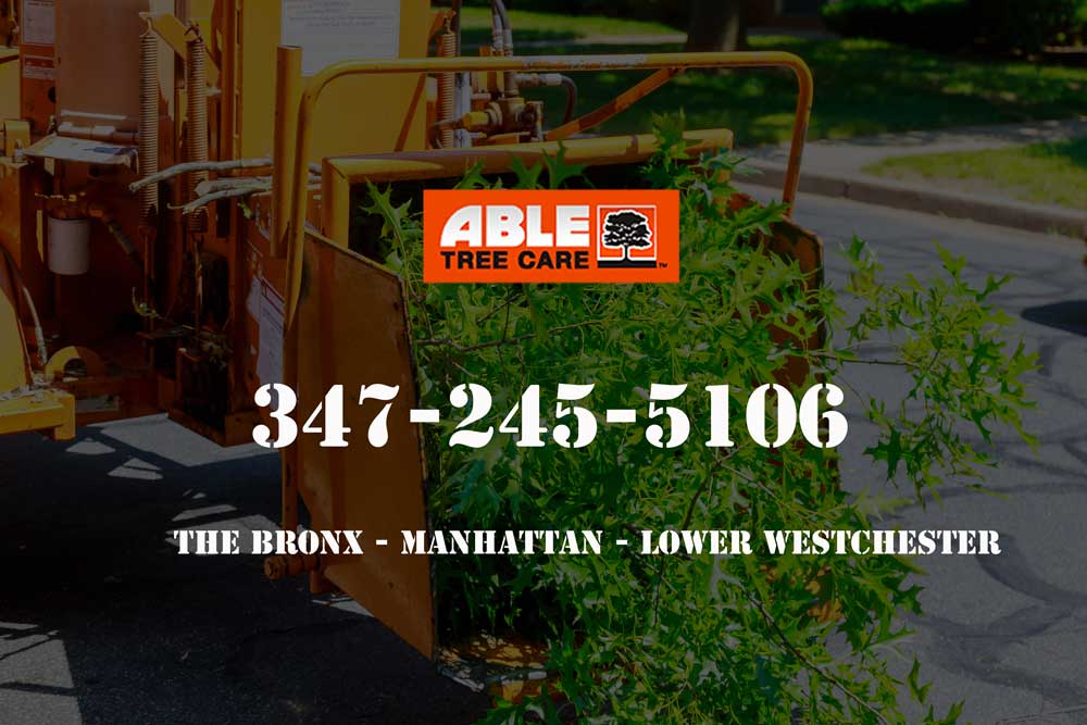 best-tree-removal-company-in-new-york-city