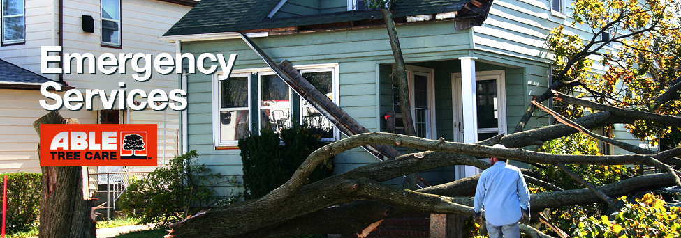 emergency tree services nyc