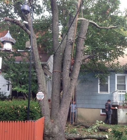 The Dangers of DIY Tree Removal